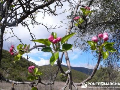 Senda Genaro - GR300 - Embalse de El Atazar - Patones de Abajo _ El Atazar; senderismo rio chillar